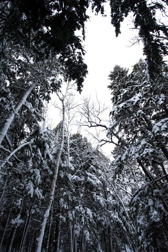 Snowshoes-22