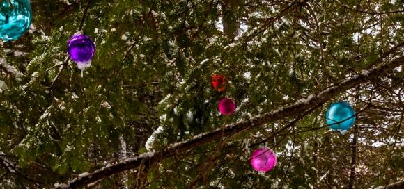 killarney-winter-dec-30-2015-1-14