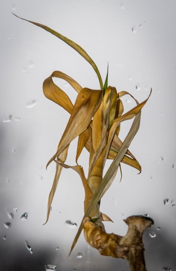 money-plant-5