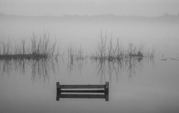 Fog April 2017-9 copy
